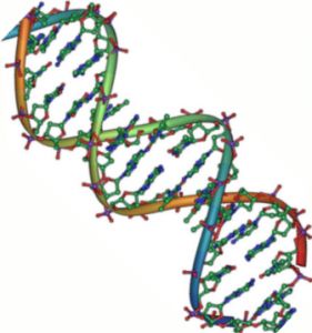 DNA_double_helix_45
